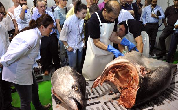 Ronqueo de atún rojo de almadraba en Salamanca