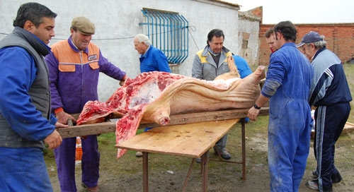 Preparando el cerdo para comenzar a descuartizarlo
