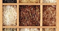 Todo sobre el arroz