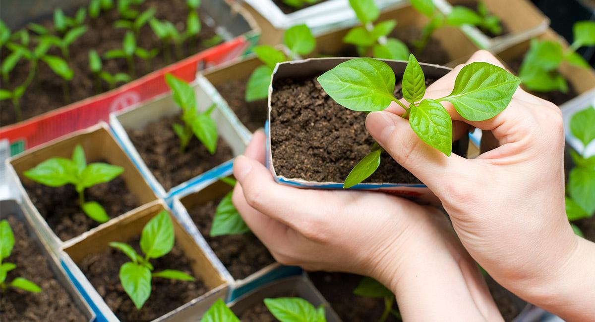 Consejos para cultivar un huerto | Hosteleriasalamanca.es